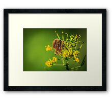 HAIRY INSECTS 3  Framed Print