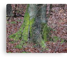 Tree & Autumn Leaves Canvas Print