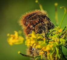 HAIRY INSECTS 4  by PhotoShopping