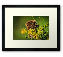 HAIRY INSECTS 4  Framed Print