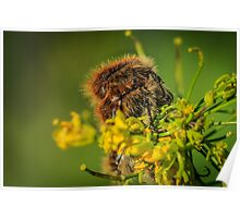 HAIRY INSECTS 4  Poster