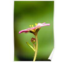 Tiny Pink Poster
