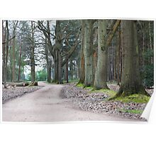 Near the Pinewood Film Studio in Black Park England Poster