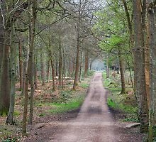 Places in movies Black Park England  by TerrillWelch