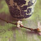 blossoms and tea by beverlylefevre
