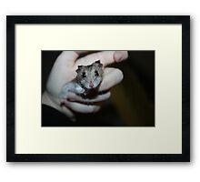 Diglett The Hamster Framed Print
