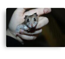 Diglett The Hamster Canvas Print
