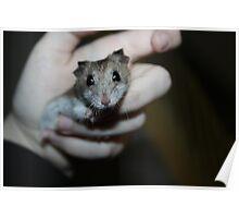 Diglett The Hamster Poster