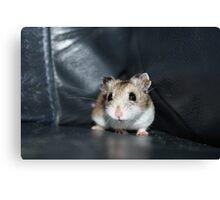 Diglett The Hamster 2 Canvas Print