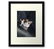 Diglett The Hamster 3 Framed Print
