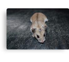 Diglett The Hamster 4 Canvas Print