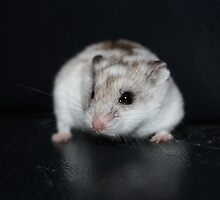 Umbriel The Hamster by EmilyWednesday