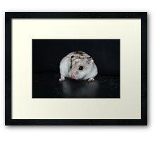 Umbriel The Hamster Framed Print