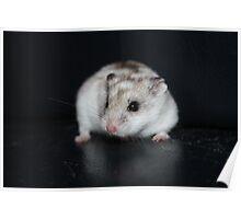 Umbriel The Hamster Poster