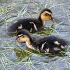 Meet the Mini Mallards by mikebov