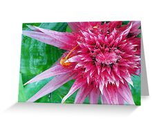Raspberry Spike Greeting Card