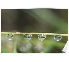 droplets dangling in a line Poster