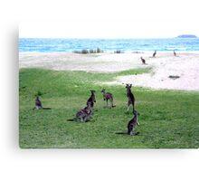Roos On A Beach Canvas Print
