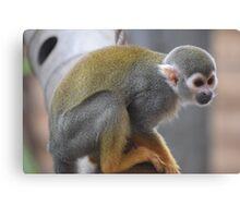 Monkey fun Canvas Print