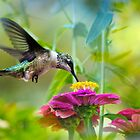 Sweet Success Hummingbird by Christina Rollo