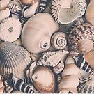 retro sea shells by artsandsoul