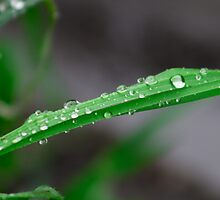 Simple Droplets by Jonathan Lynch