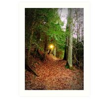 Eastern Hemlock Tree Forest at Sunset Art Print