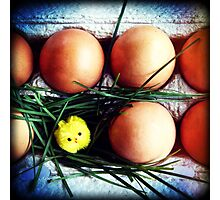 Easter surprise Photographic Print