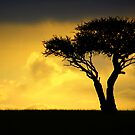 Tree by Charuhas  Images