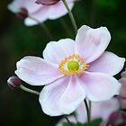 Delicate Beauty by Karen E Camilleri