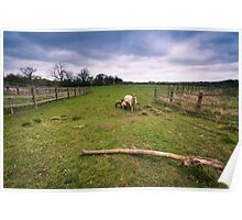 Sheep under a stormy sky Poster