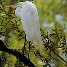 Egret Hanging Out In The Shade by imagetj