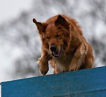 Dog Agility No. 1  (name of Karv A, Latin for beware) by J-images