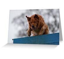 Dog Agility No. 1  (name of Karv A, Latin for beware) Greeting Card