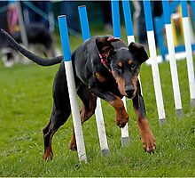 Dog Agility No. 2 by J-images
