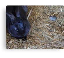 Friends in the Hutch Canvas Print