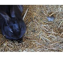 Friends in the Hutch Photographic Print