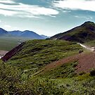 Denali by bus ! by Nancy Richard
