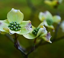 And in the Spring When the Flowers Begin to Bloom by Scott Mitchell