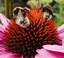 Busy Bees by John (Mike)  Dobson