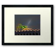 Grasshopper in the spotlight Framed Print