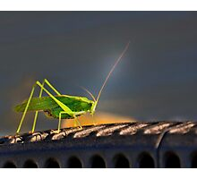 Grasshopper in the spotlight Photographic Print