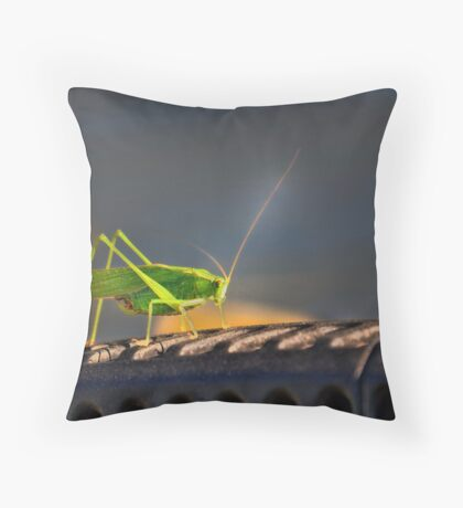 Grasshopper in the spotlight Throw Pillow