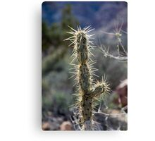 Cactus and the Sun Canvas Print