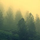 Mist by Charuhas  Images