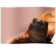 Rupert the Tortoise Poster