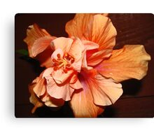 Peach Hibiscus Canvas Print