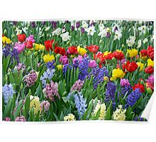 Colorful spring garden Poster