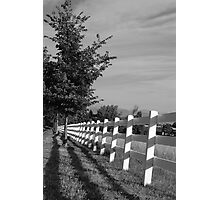 Tree Lined Fence Photographic Print