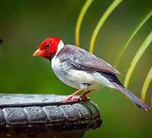 Red Head... by Tracie Louise